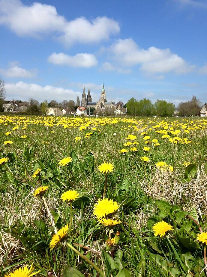 Bayeux Cathedral from the field.jpg