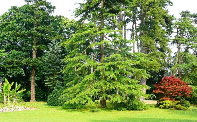 Botanic garden Bayeux.jpg