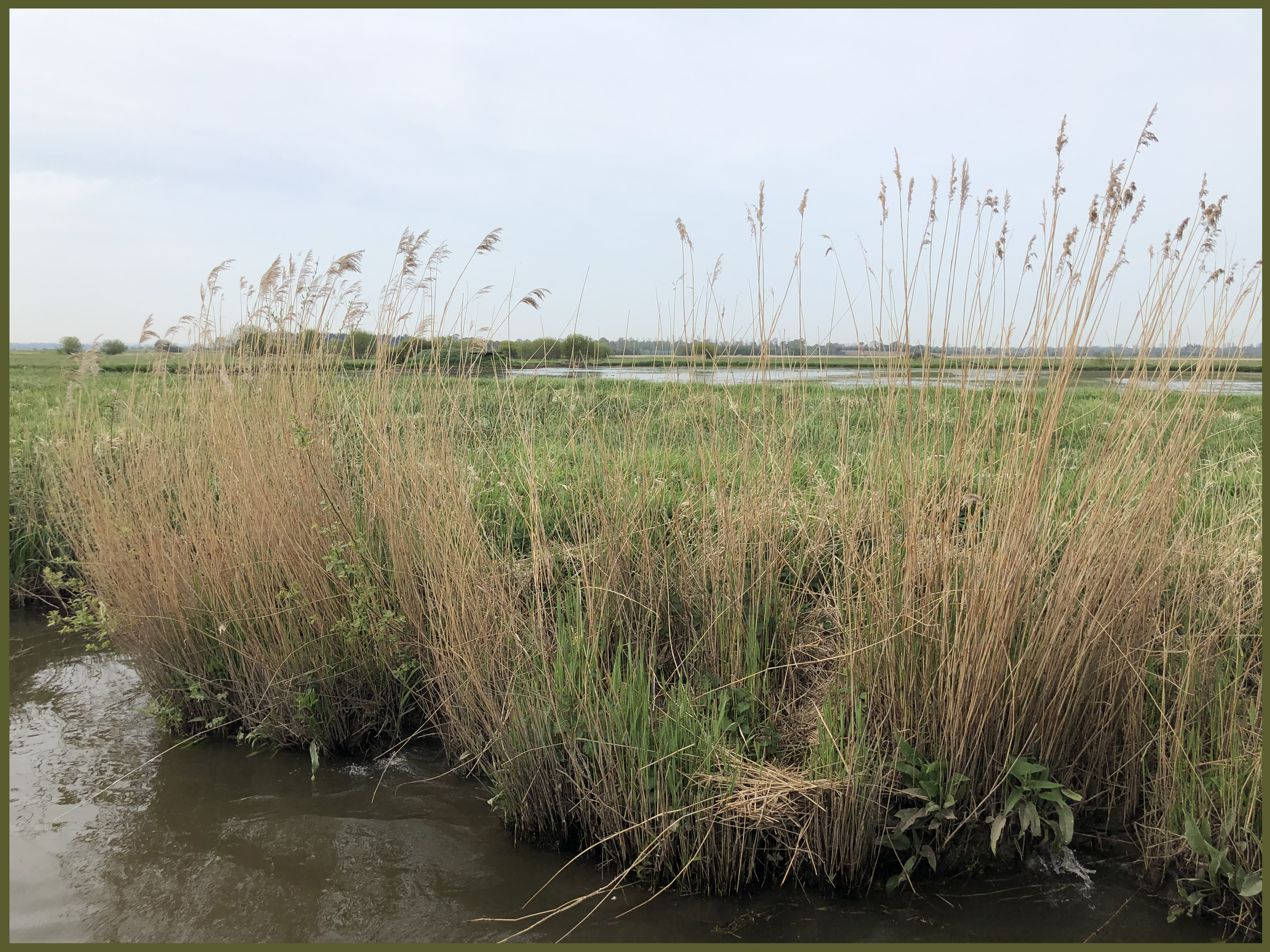 Carentan swamps copy